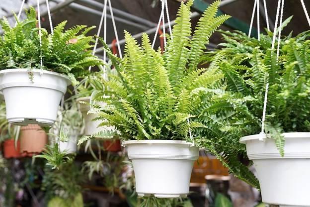 Домашние растения для нормализации влажности