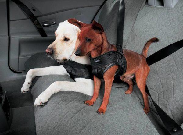 Ремень безопасности для животных